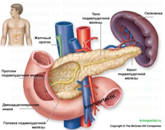 pancreas-1.jpg